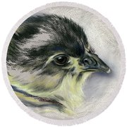 Black Australorp Chick Portrait Round Beach Towel