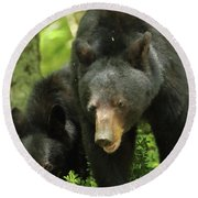 Round Beach Towel featuring the photograph Black Bear And Cub On Ground by Coby Cooper