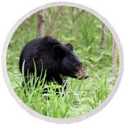 Round Beach Towel featuring the photograph Black Bear by Andrea Silies
