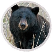 Black Bear Closeup Round Beach Towel