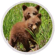 Black Bear Cubs Round Beach Towel