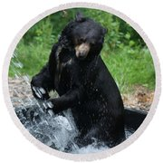 Black Bear Enjoys His Shower Round Beach Towel