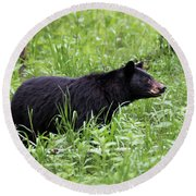 Round Beach Towel featuring the photograph Black Bear In The Woods by Andrea Silies