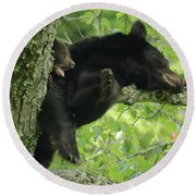 Round Beach Towel featuring the photograph Black Bear In Tree With Cub by Coby Cooper