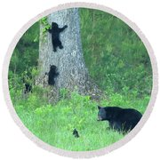 Round Beach Towel featuring the photograph Black Bear Sow And Four Cubs by Coby Cooper