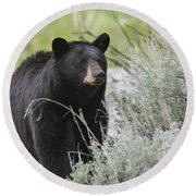 Black Bear Sow Round Beach Towel
