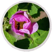 Round Beach Towel featuring the photograph Black Bee Collecting Pollen by Darcy Michaelchuk