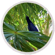 Round Beach Towel featuring the photograph Black Bird And Green Leaf by Francesca Mackenney