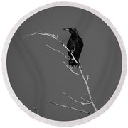 Black Bird On A Branch Round Beach Towel