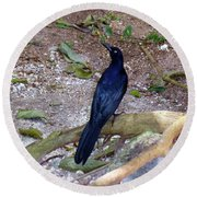 Round Beach Towel featuring the photograph Black Bird On Branch by Francesca Mackenney