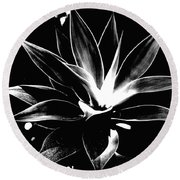 Black Cactus  Round Beach Towel