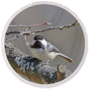 Black Capped Chickadee 1109 Round Beach Towel by Michael Peychich