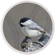 Black Capped Chickadee 1128 Round Beach Towel by Michael Peychich
