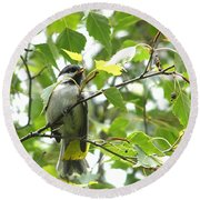 Round Beach Towel featuring the photograph Black Capped Chickadee  by Angie Rea