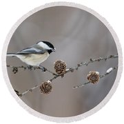 Round Beach Towel featuring the photograph Black-capped Chickadee by Mircea Costina Photography