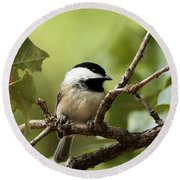 Black Capped Chickadee On Branch Round Beach Towel