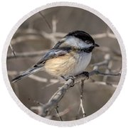 Black-capped Chickadee Iv Round Beach Towel