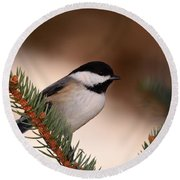Black-capped Cickadee II Round Beach Towel