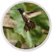 Black-chinned Hummingbird Round Beach Towel