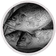 Black Crappie Panfish With Fish Filet Knife In Black And White Round Beach Towel