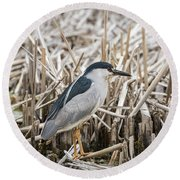 Black-crowned Night Heron 2017-1 Round Beach Towel by Thomas Young