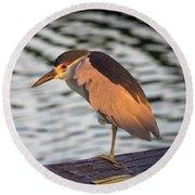 Black Crowned Night Heron At Dawn Round Beach Towel