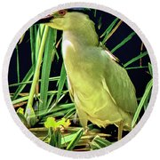 Round Beach Towel featuring the photograph Black Crowned Night Heron by Joseph Hollingsworth