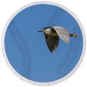 Black-crowned Night Heron Round Beach Towel by Yeates Photography