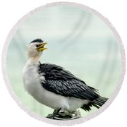 black faced Cormorant 02 Round Beach Towel by Kevin Chippindall