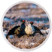 Round Beach Towel featuring the photograph Black Grouses by Torbjorn Swenelius