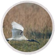 Black-headed Ibis 01 Round Beach Towel