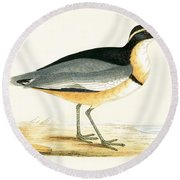 Black Headed Plover Round Beach Towel by English School