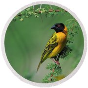 Black-headed Weaver Round Beach Towel