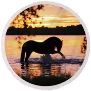 Black Horse Bathing In Sunset River Round Beach Towel