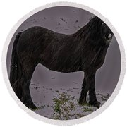 Black Horse In The Snow Round Beach Towel