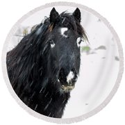 Black Horse Staring In The Snow Round Beach Towel