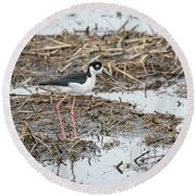 Black-necked Stilt 2017-1 Round Beach Towel by Thomas Young