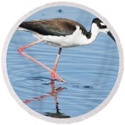 Black-necked Stilt Wading  Round Beach Towel
