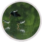 Black-necked Stilts 4301-080917-1cr Round Beach Towel