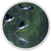 Black-necked Stilts 4302-080917-2cr Round Beach Towel