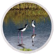 Round Beach Towel featuring the photograph Black-necked Stilts by Patricia Griffin Brett