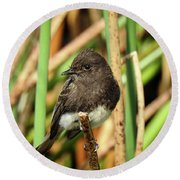Black Phoebe Close Up Round Beach Towel