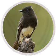 Round Beach Towel featuring the photograph Black Phoebe by Doug Herr
