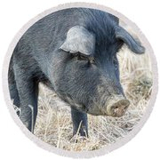Round Beach Towel featuring the photograph Black Pig Close-up by James BO Insogna
