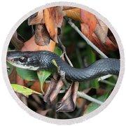 Black Racer Snake Stare Down Round Beach Towel