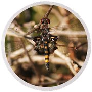 Round Beach Towel featuring the photograph Black Saddlebags Dragonfly by William Selander