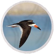 Black Skimmer In Flight Round Beach Towel