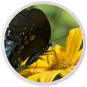 Black Swallowtail Drinking Round Beach Towel