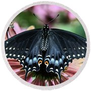 Black Swallowtail 3 Round Beach Towel