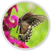 Round Beach Towel featuring the photograph Black Swallowtail Butterfly by Christina Rollo